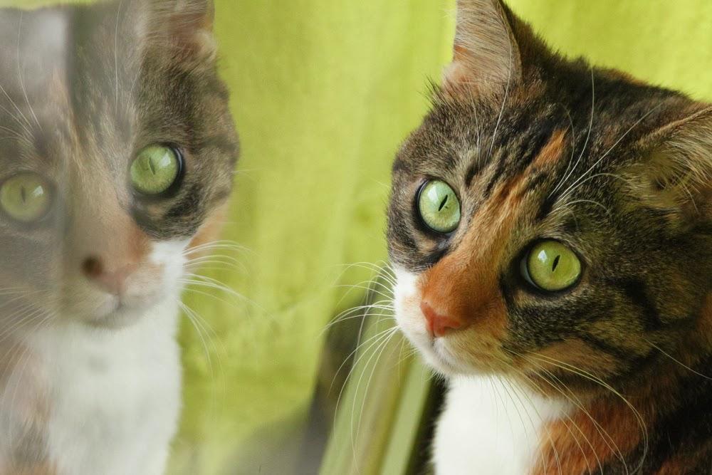 Image with image reflection of my cat, Irida